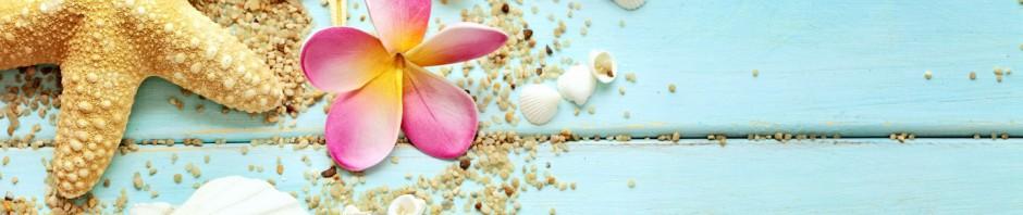 cropped-seashells-wallpaper-10350910