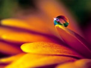 macro-dew-drop-flower-petal-Favim.com-483631